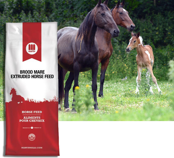 Horses And Feed Bag